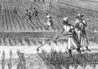 Rice-Plantation
