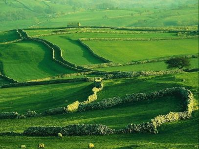 Landscape - English Green Sheep